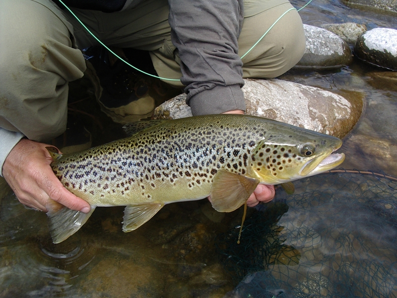 Trout with great markings